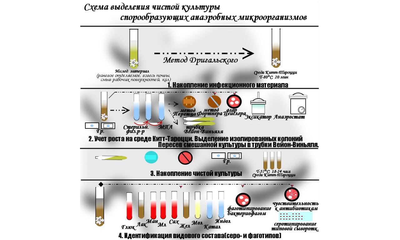 Культивирование анаэробных организмов