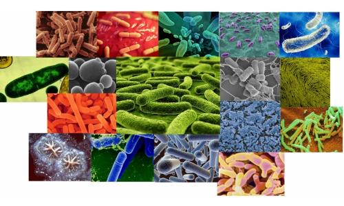 Бактерии для выгребных ям