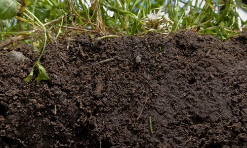 Торфянистые почвы - причина появления примесей в воде